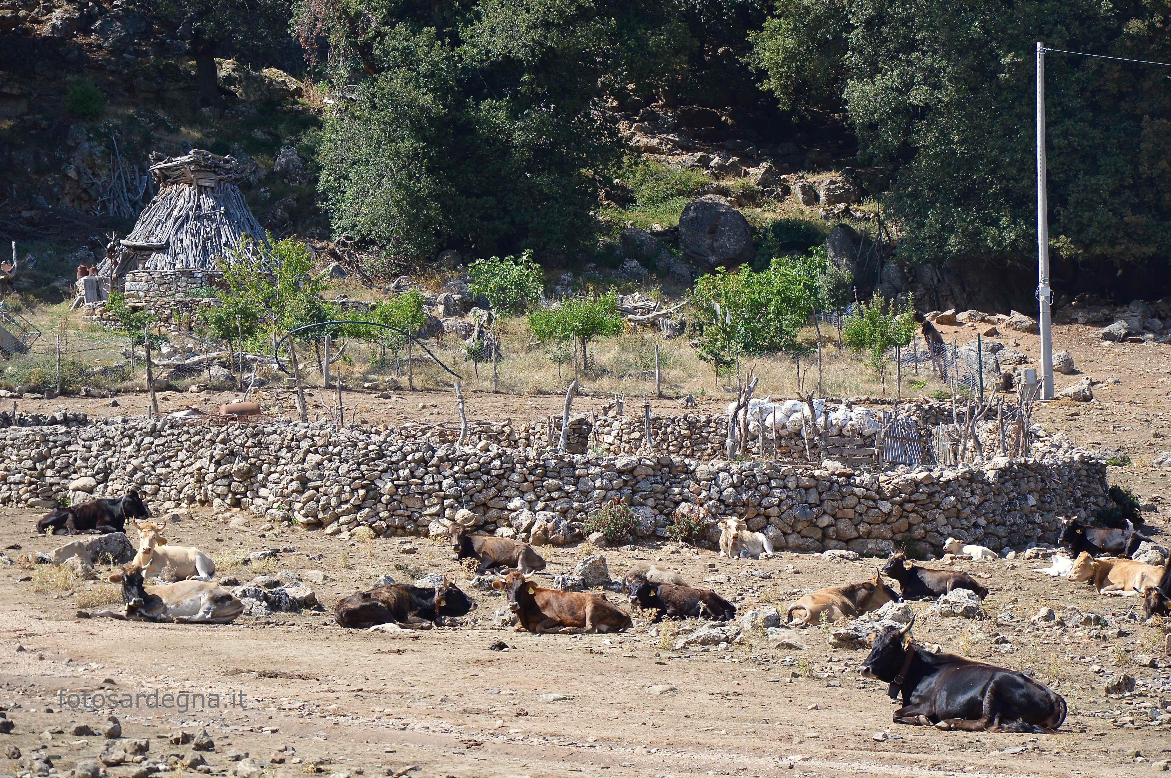 Televai, gli ovili in pietra e la pinnetta