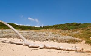 Bellissimo tronco slavato dal mare.