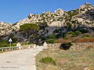 Le bellissime rocce granitiche di Fornelli e gli abitanti più conosciuti dell'Isola, gli asinelli albini.