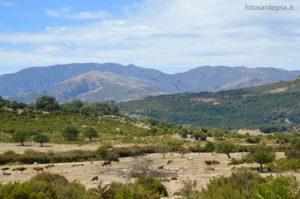 I Monti del Gennargentu, ben visibili nel primo tratto di strada; a sinistra il blocco di Punta Lamarmora, sulla destra l'Arcu Gennargentu e quindi il blocco di Bruncu Spina.
