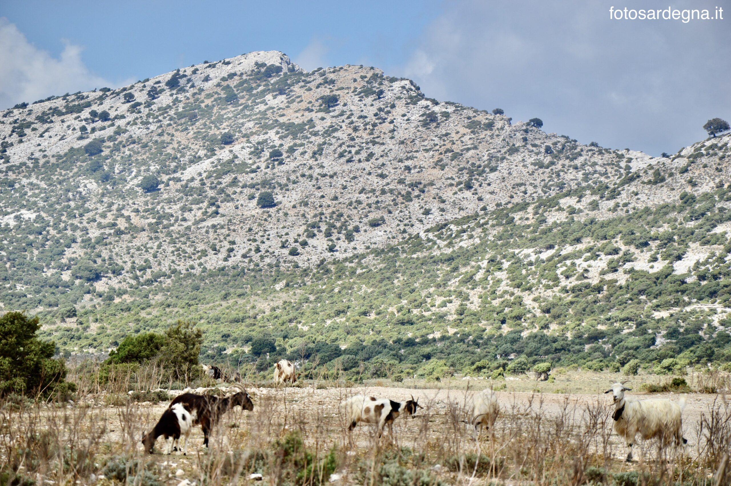 La maestosa sagoma bianca di Punta 'e Seni