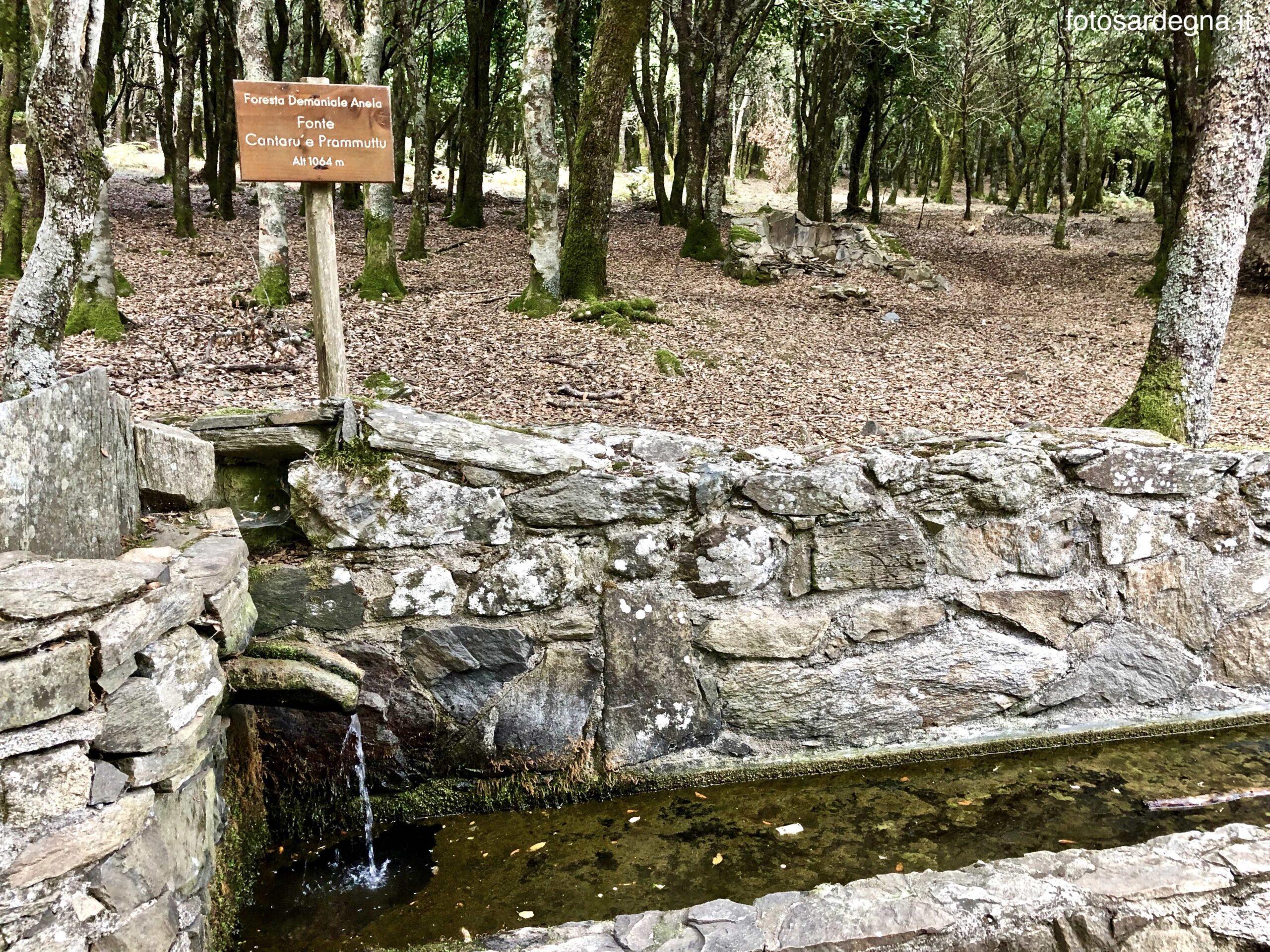 Foresta Anela fonte Cantaru 'e Prammuttu