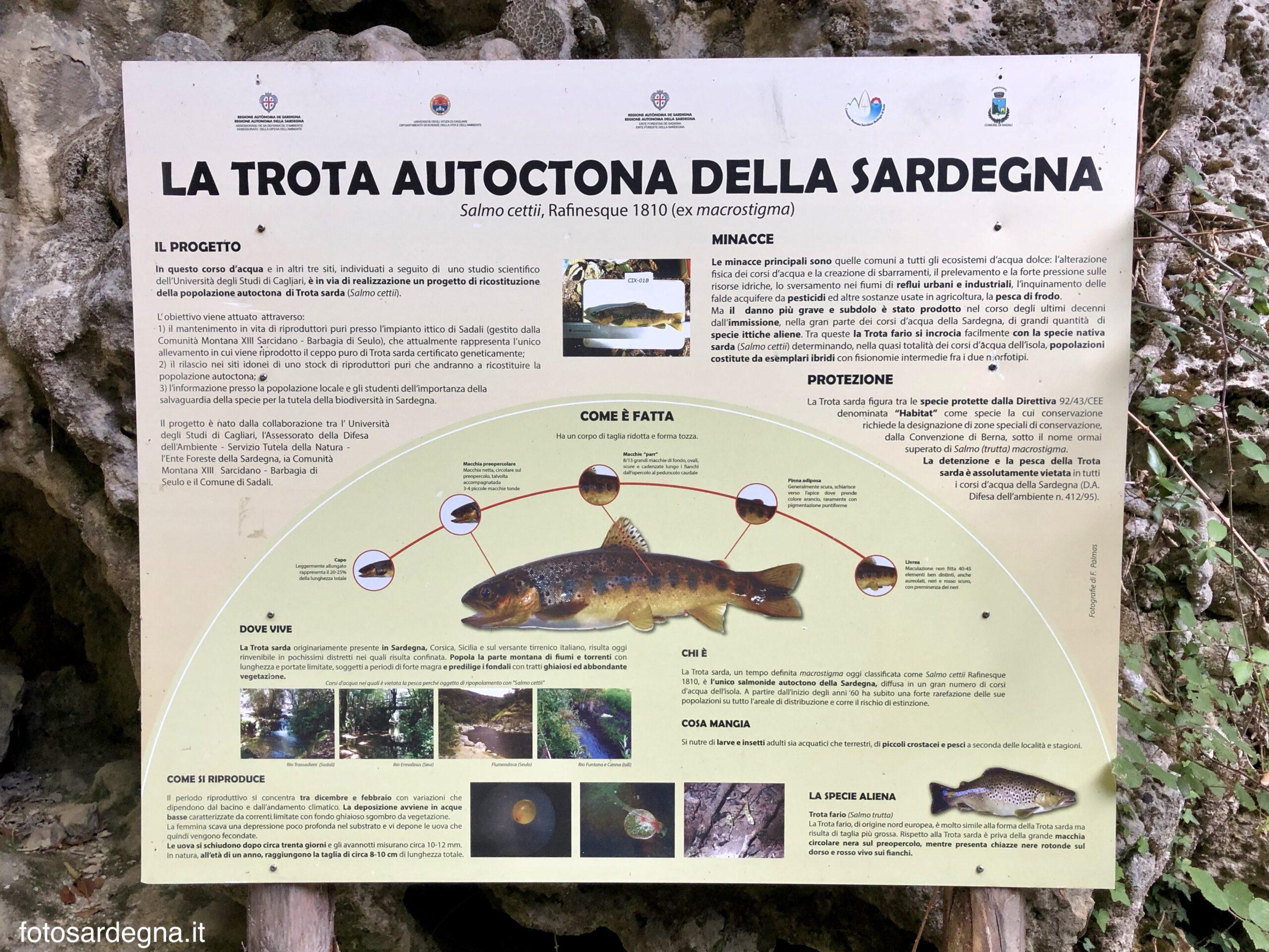 Pannello informativo sull Trota sarda, presso Su Stampu de Su Turrunu