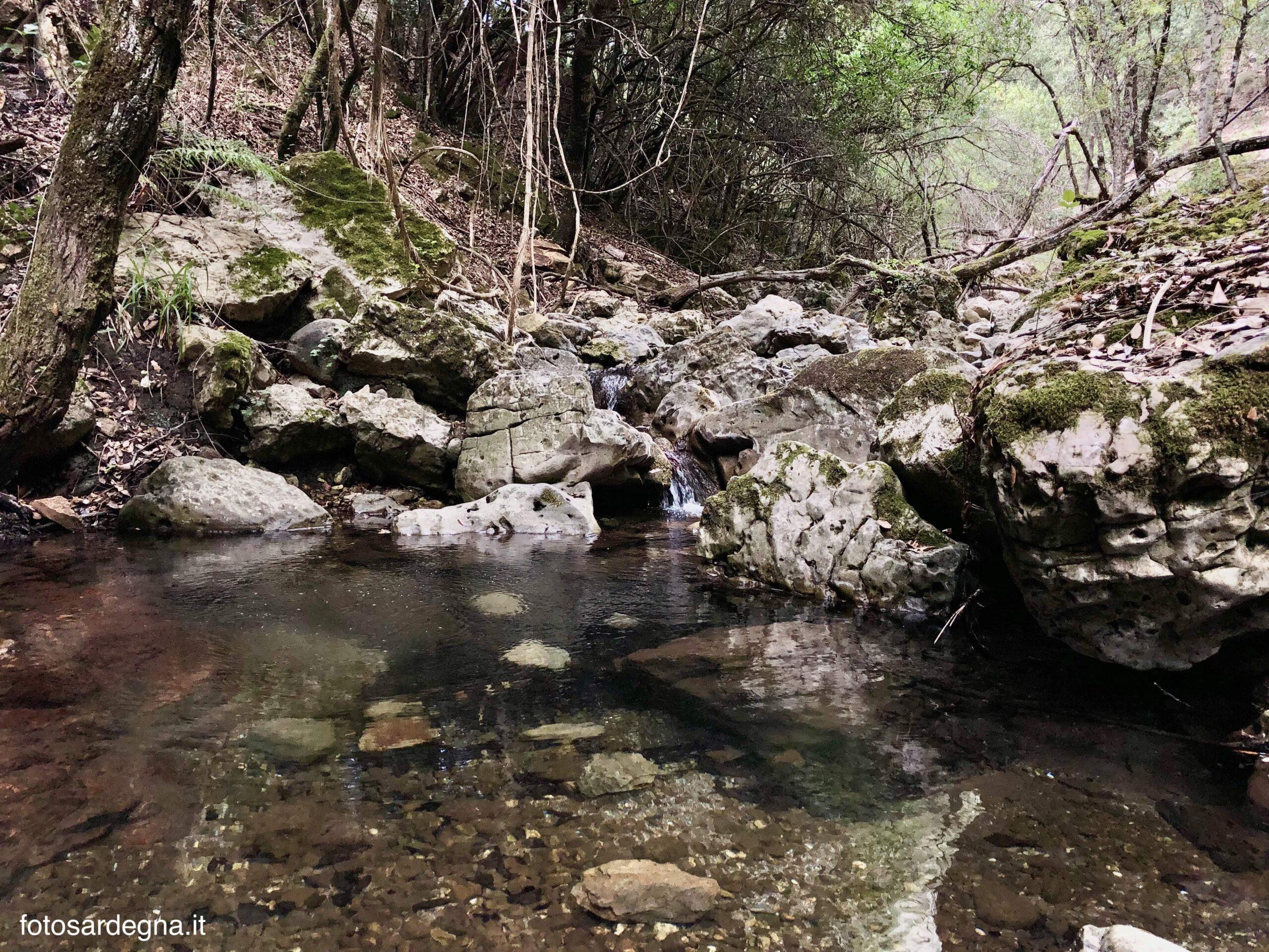 Laghetto nella Foresta Addoli