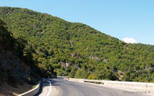 Il tratto di strada che costeggia il Riu Cannas e il Riu Campuomu attraversa fittissimi boschi.