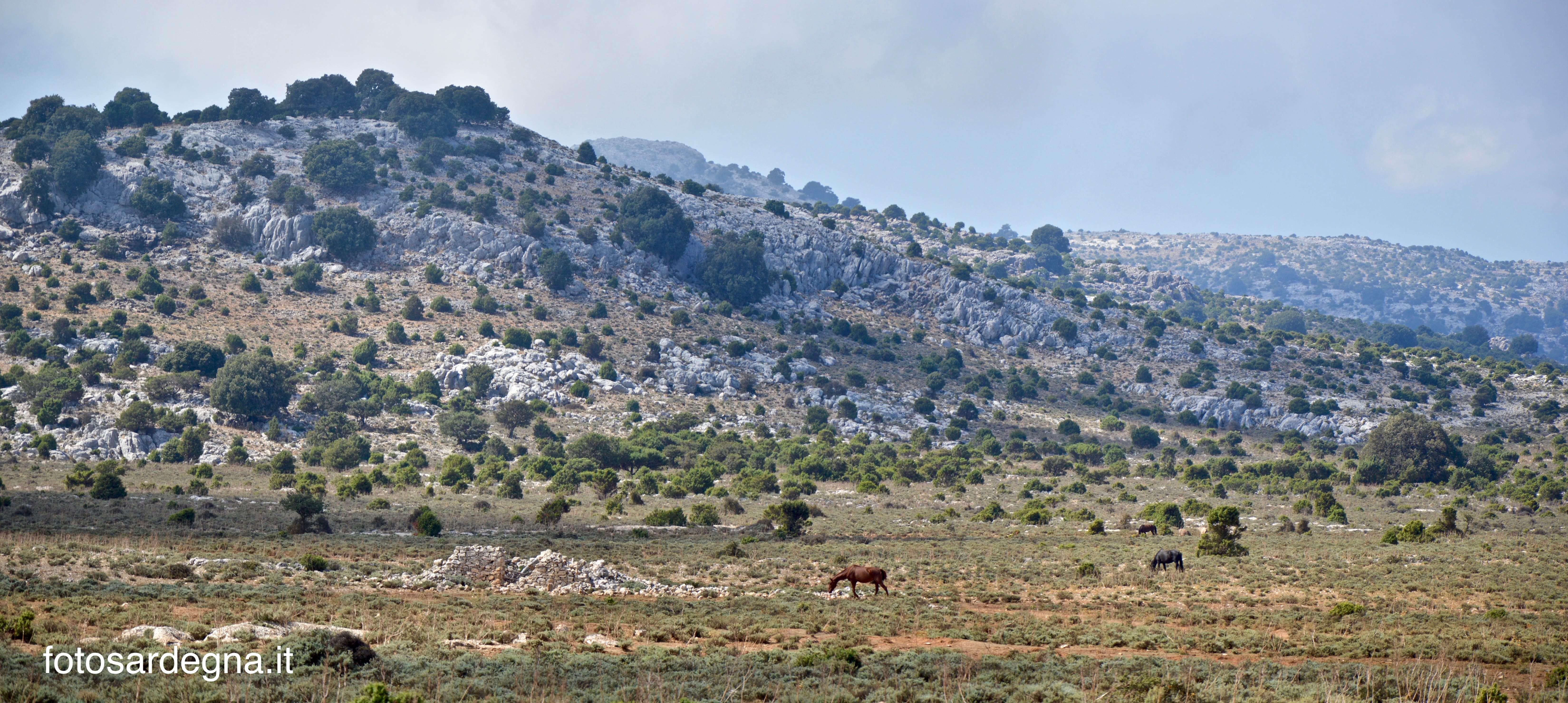 Bruncu Pungiale, ad ovest di Campu Oddeu.