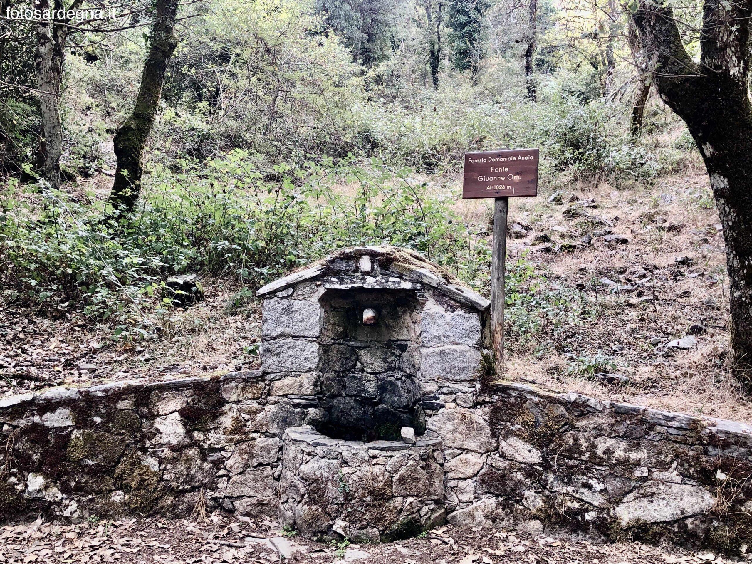 Foresta Anela fonte Giuanne Ortu